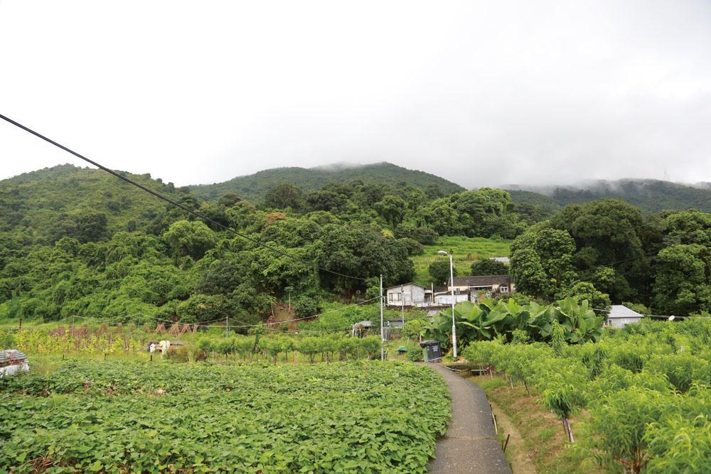 林村谷至今仍然保留著不少的農地和花田,遊人只需沿林村河走,便能找到這片世外桃源。